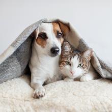 Signature for Treasured Pets